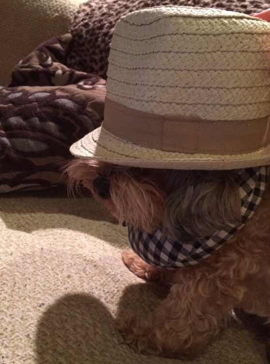 Toby rocking his baby sister's fedora. Looking adorable as ever...