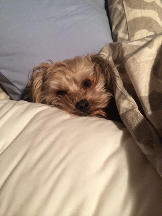 Don't make me get outta bed!!