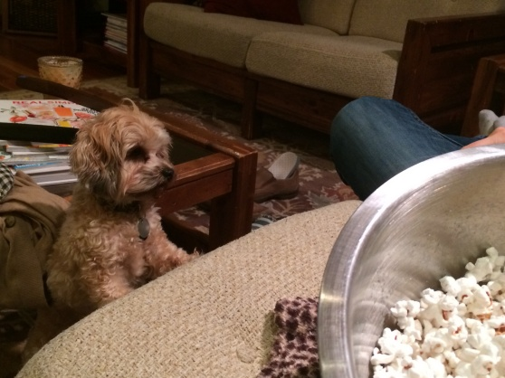 Toby was pumped for movie time and waited patiently for dropped popcorn.